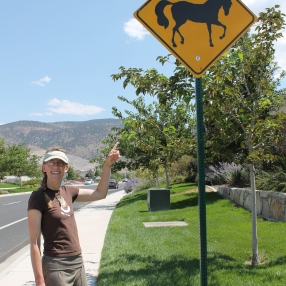 No one believes there are wild horses around!