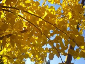 Last glimpse of fall