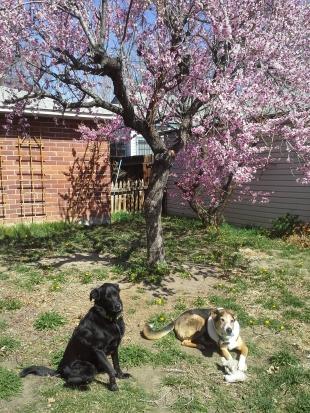 The pups enjoying the spring