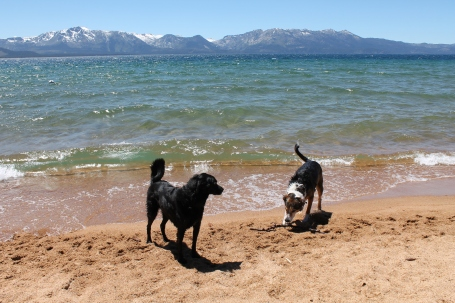 Slick and Parker in Tahoe