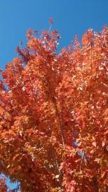 Fall in Reno