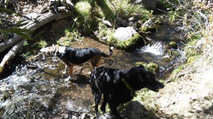 Creek with dogs