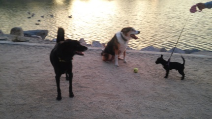Virginia Lake with the dogs