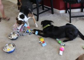 Enjoying their gifts